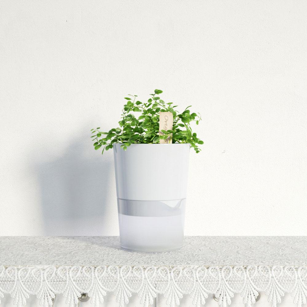 plant 27 AM141 Archmodels