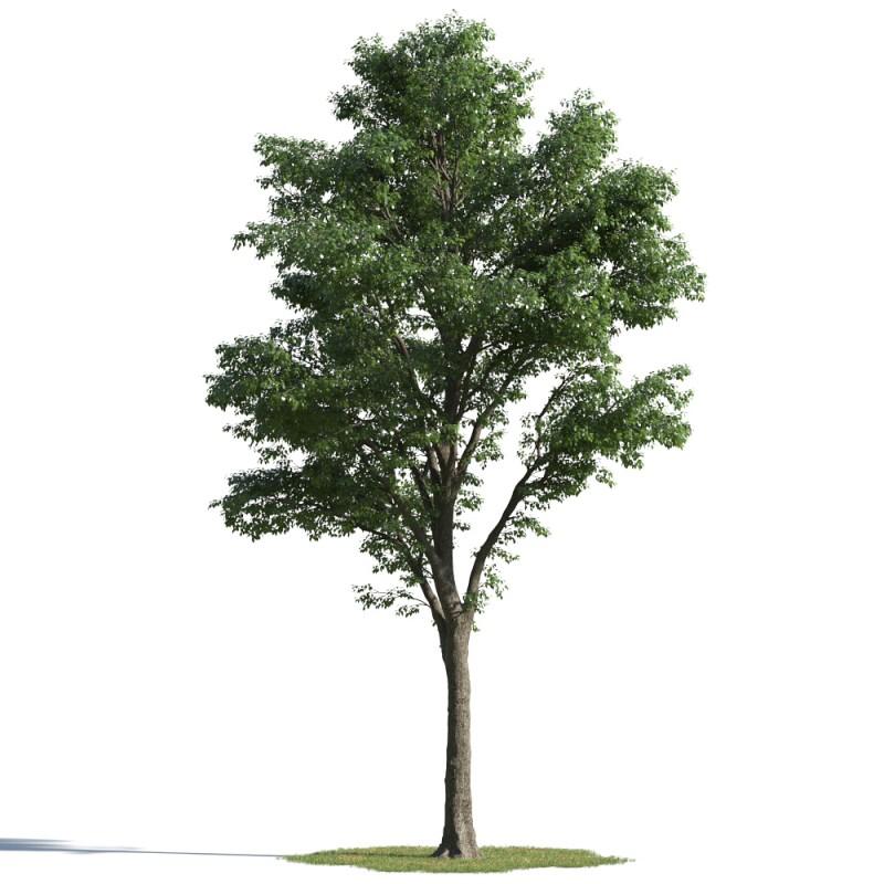 tree 04 AMC01