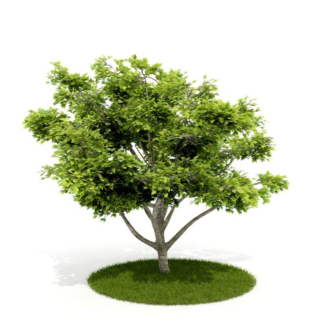Plant 28 AM52 C4D