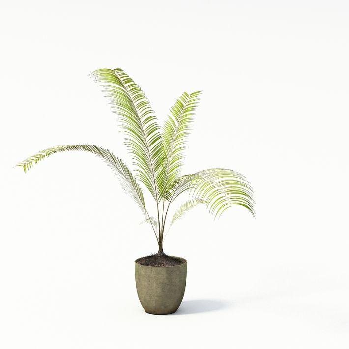 Plant 07 AM24