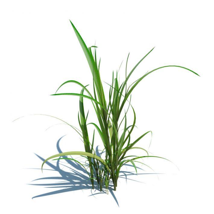 simple grass 067 am124