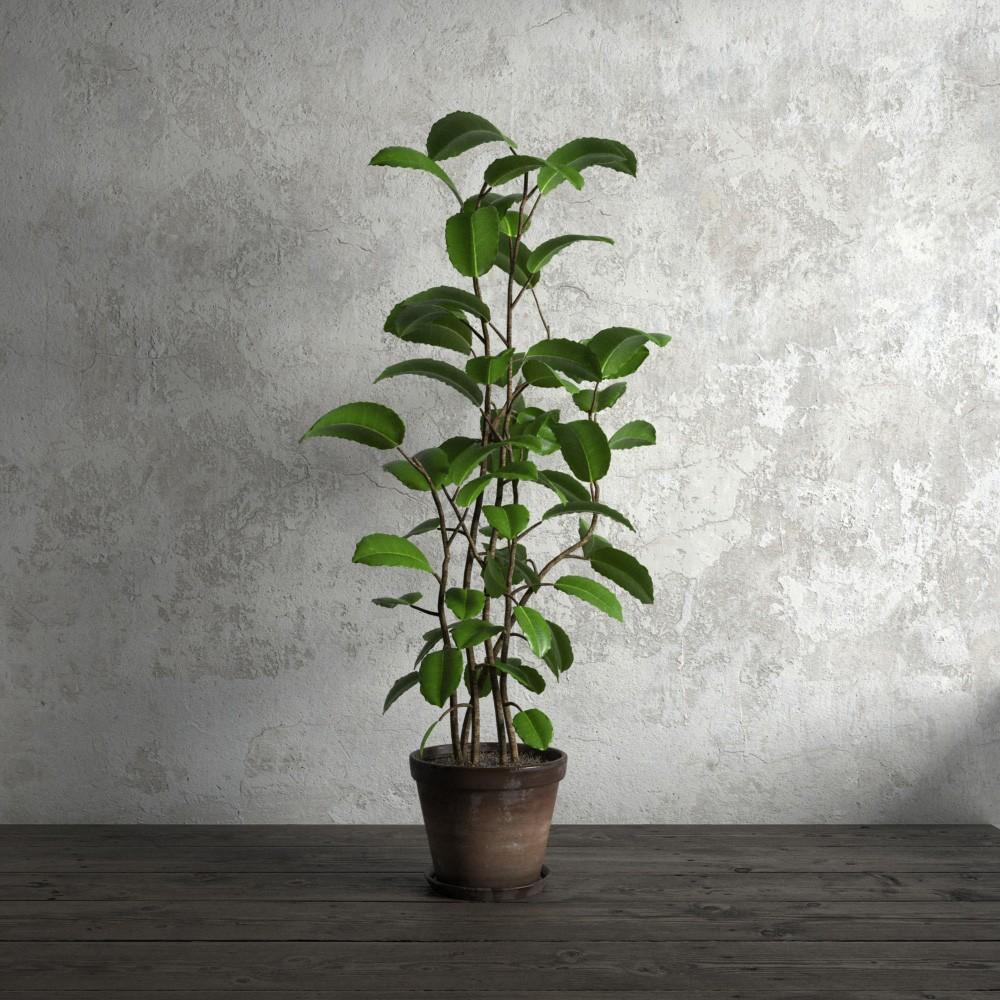 plant 52 AM173 Archmodels