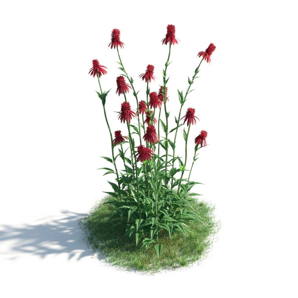 plant 36 AM183