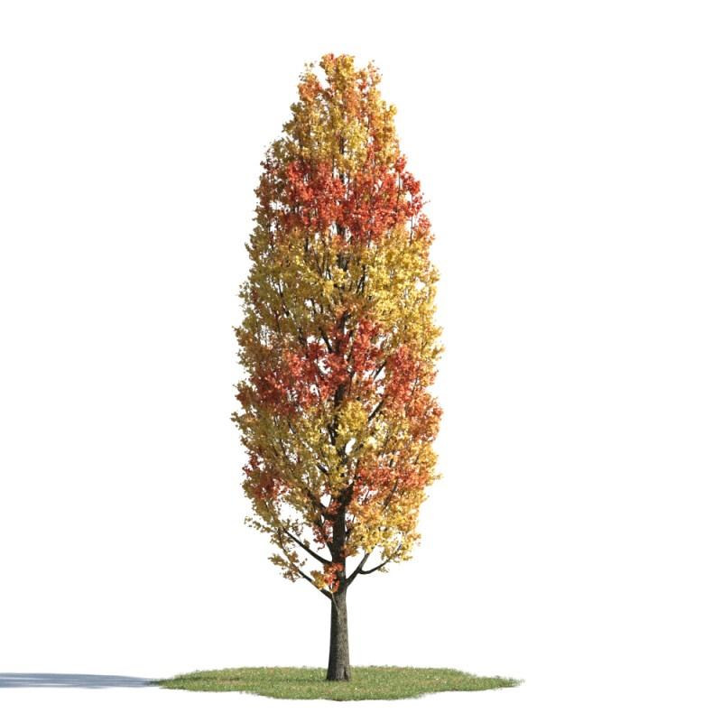 tree 59 AMC01