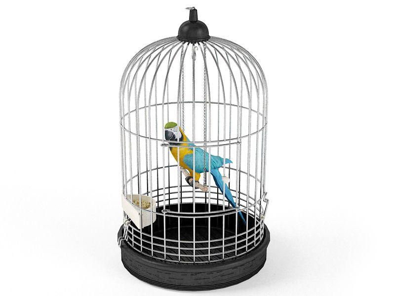 parrot 6 AM83 Archmodels