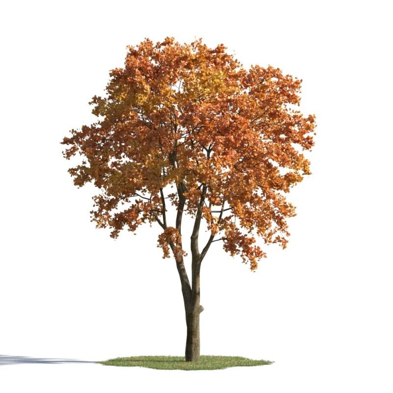 tree 58 AMC1