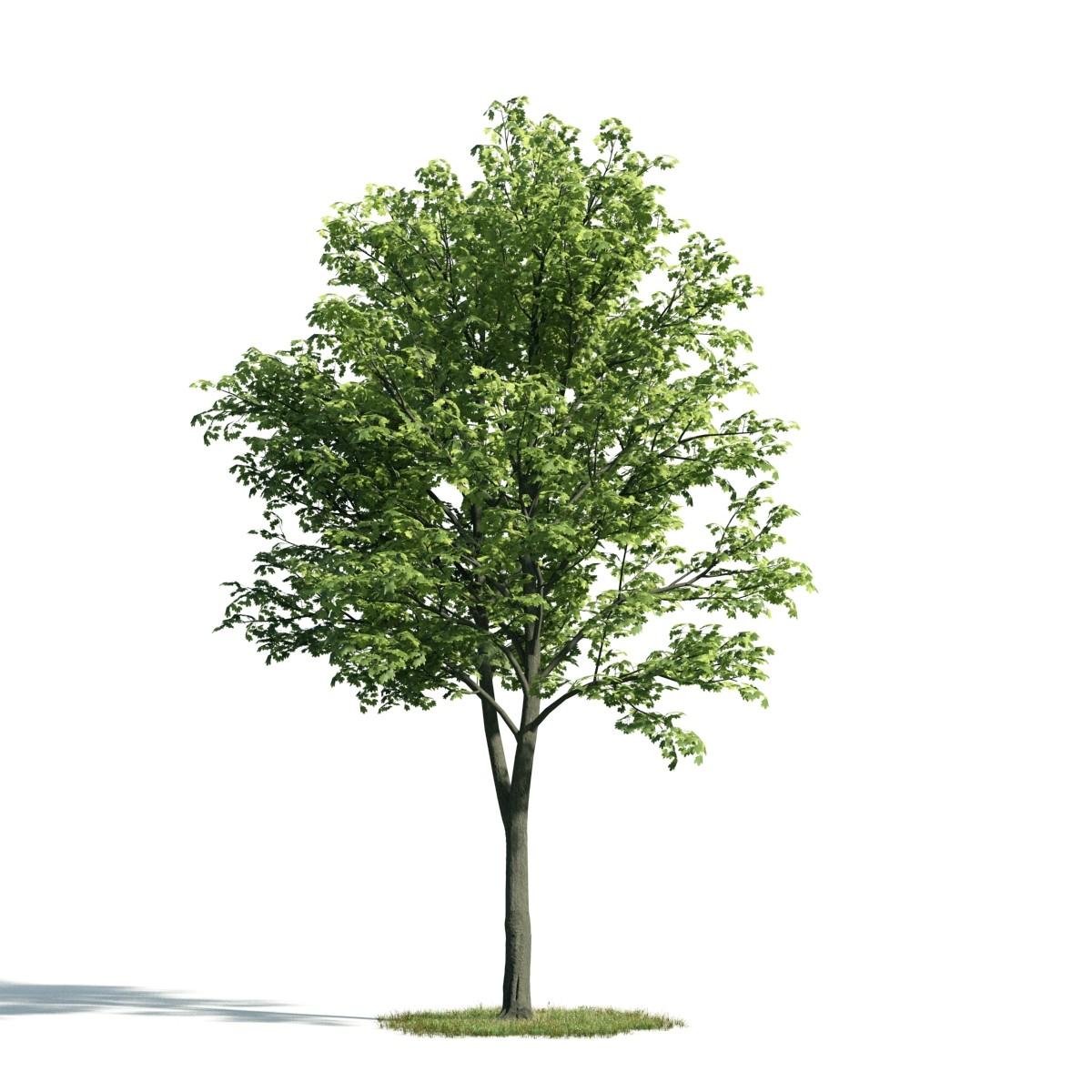 Tree 24 am171