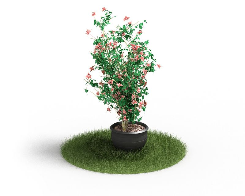 Plant 47 AM4 for Cinema4D Archmodels