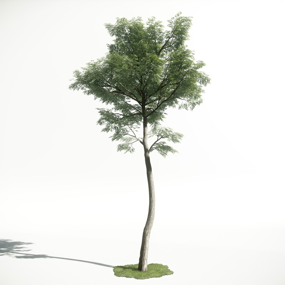 Tree 47 AM1 for CryEngine Archmodels
