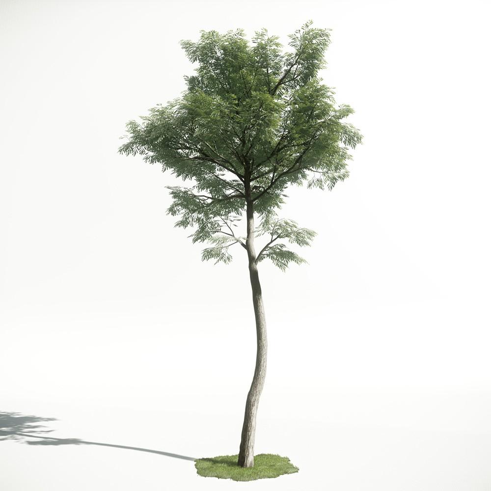 Tree 47 amce1