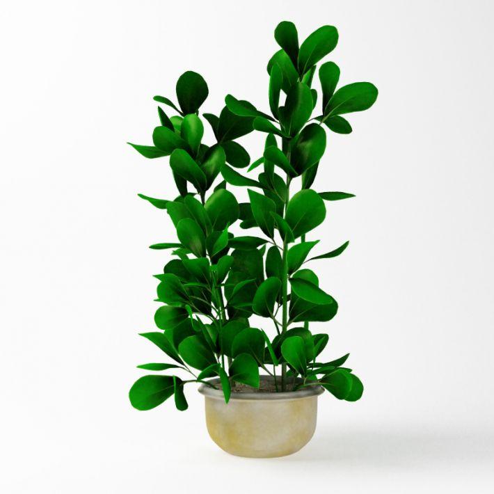Plant 60 AM75
