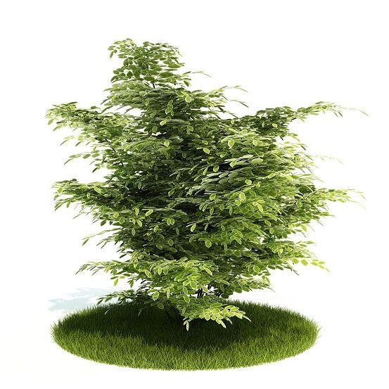 Plant 10 AM52 Archmodels