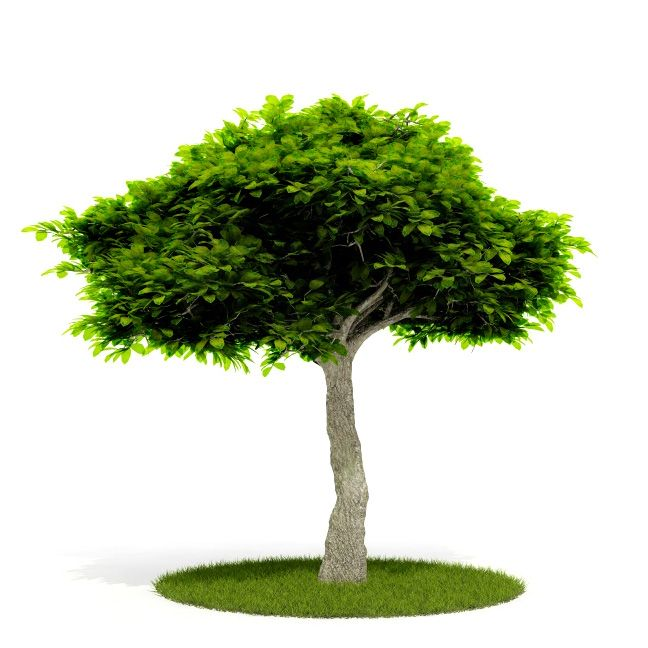 Plant 35 AM52 C4D
