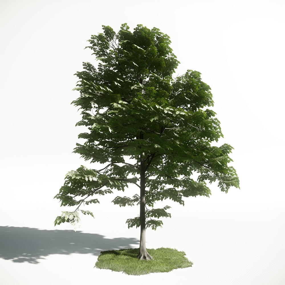 Tree 40 AM1 for CryEngine Archmodels