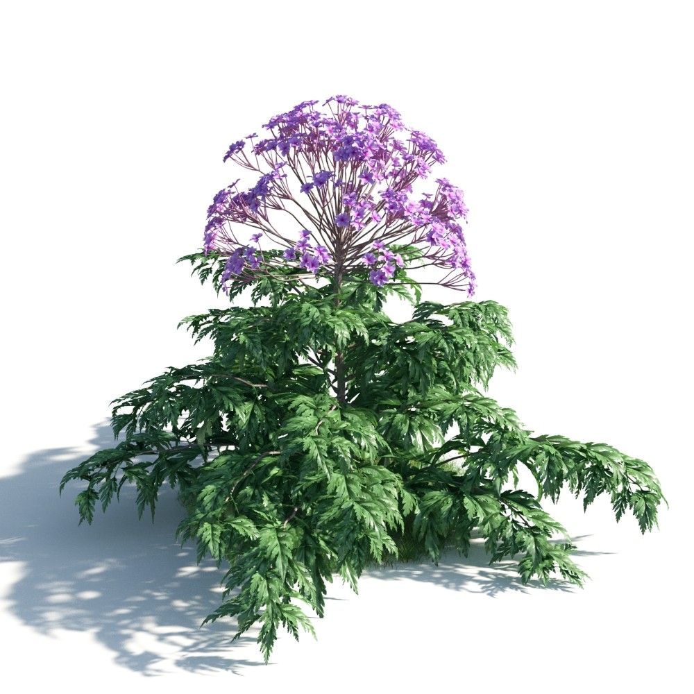 plant 11 AM183 Archmodels