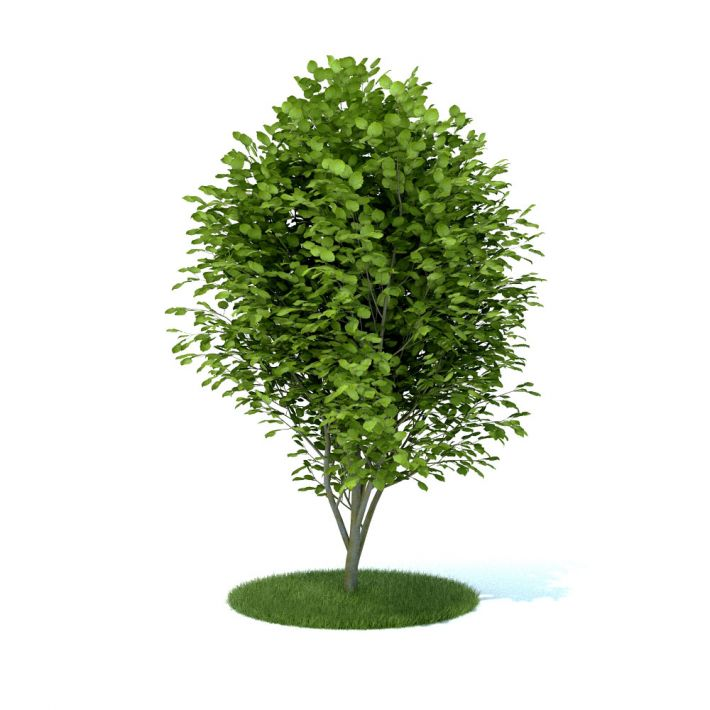 plant 43 AM105 Archmodels