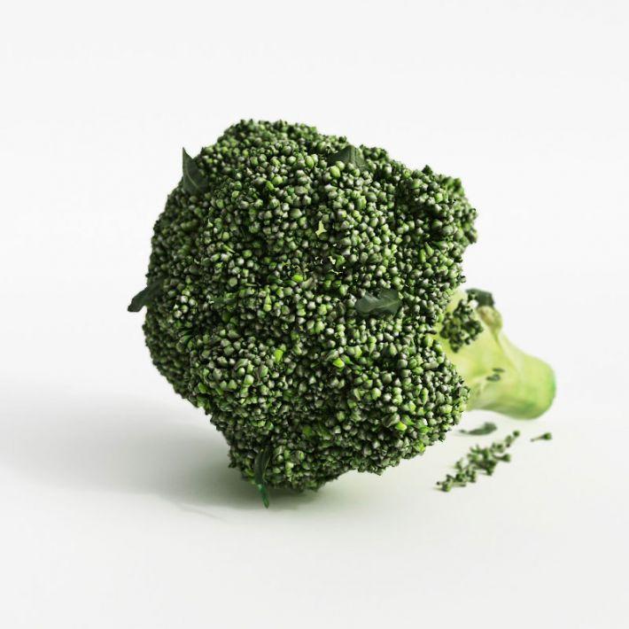 broccoli 32 AM130 Archmodels