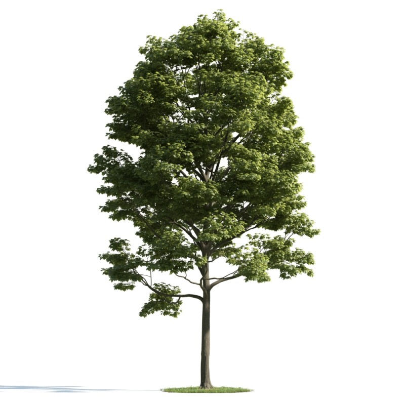 tree 29 AM163 Archmodels