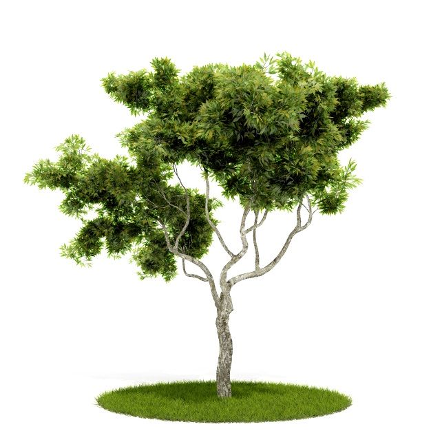 Plant 54 AM52 for Cinema4D Archmodels