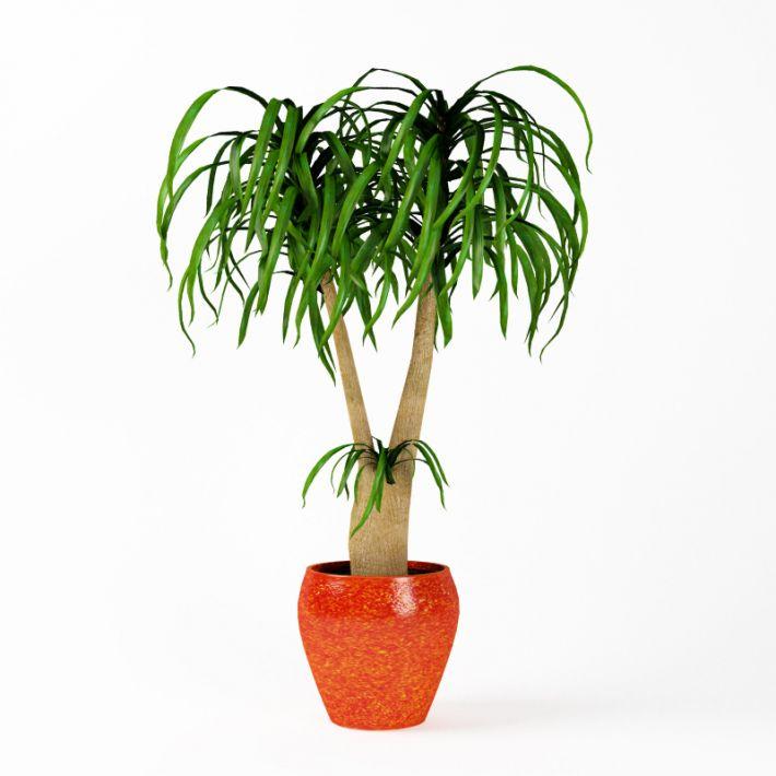 Plant 17 AM75 Archmodels