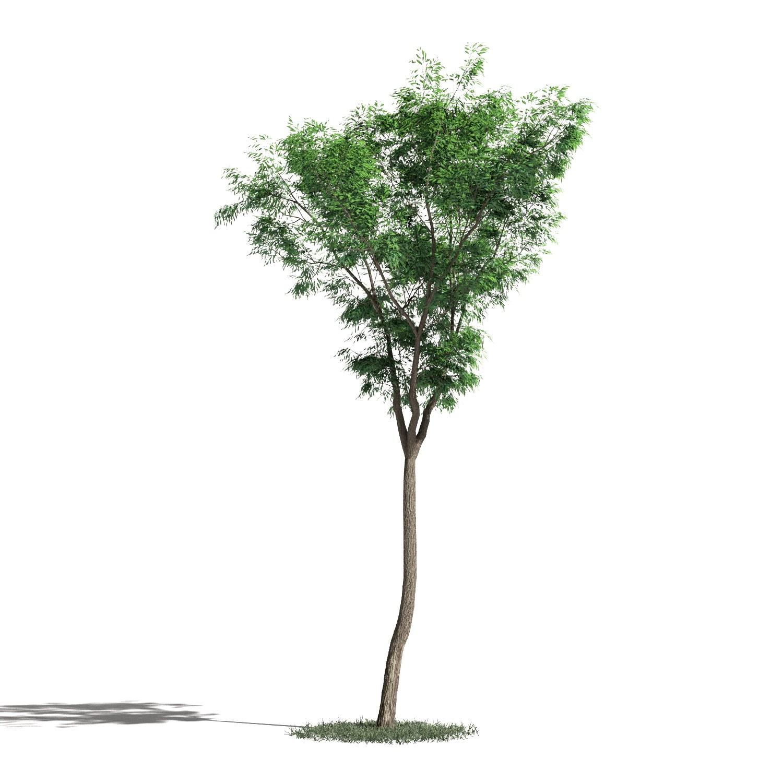 Tree 46 AM1 for Blender Archmodels