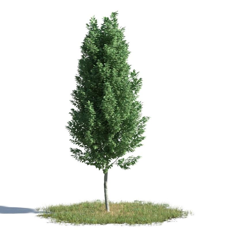 tree 94 AMC01