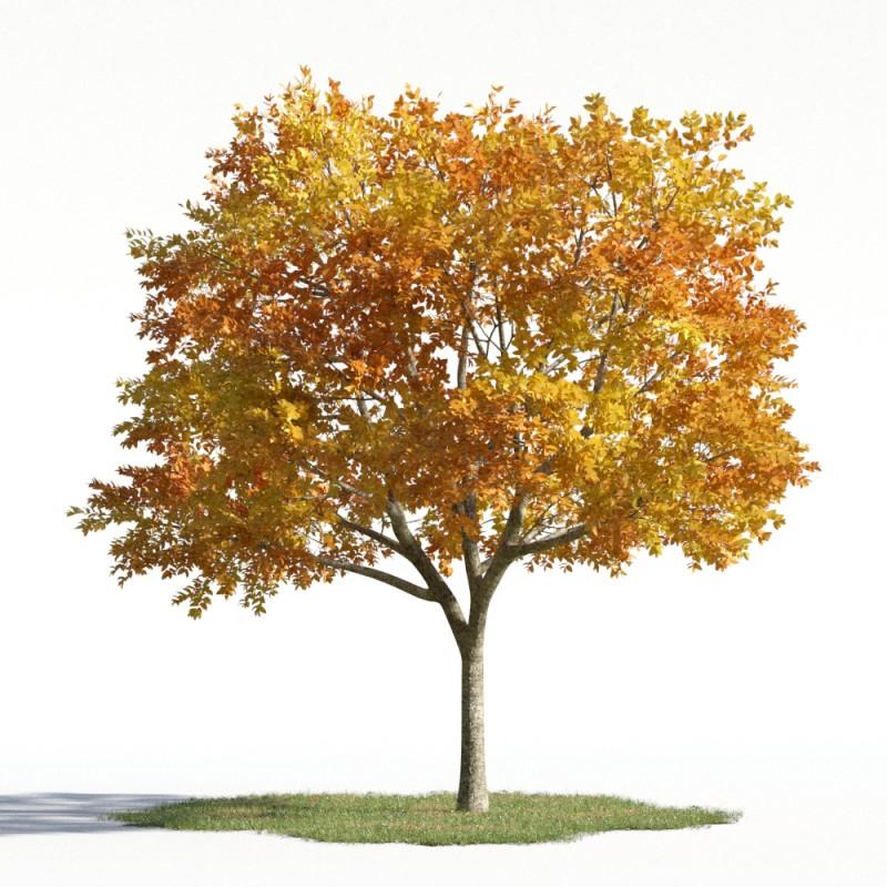 tree 56 AMC01