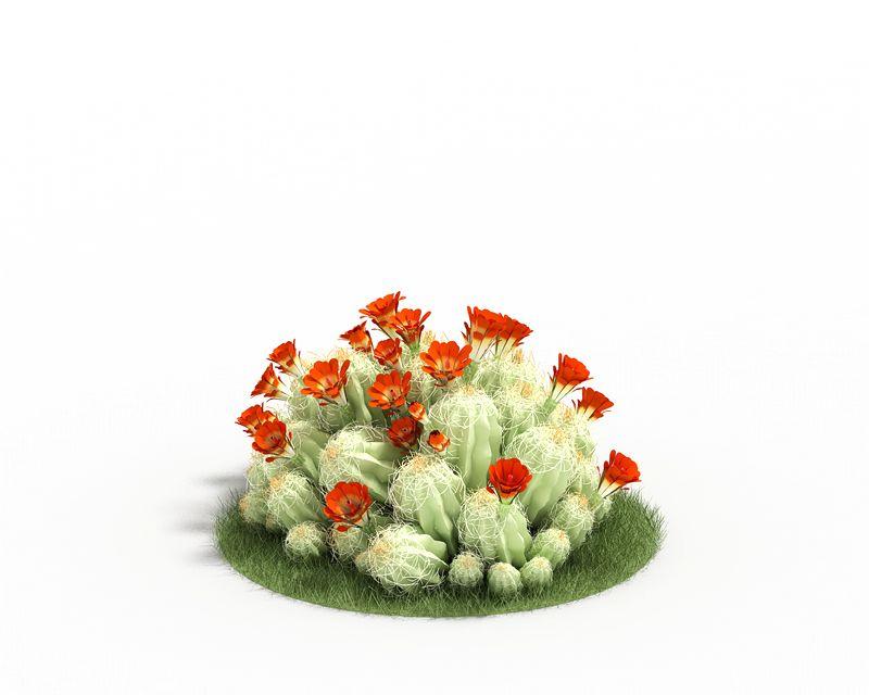 Echinocereus triglochid 57 AM3 for Cinema4D Archmodels