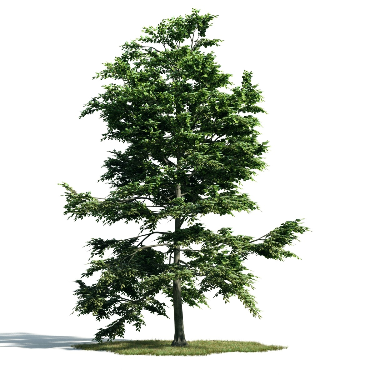 Tree 10 AM171 Archmodels