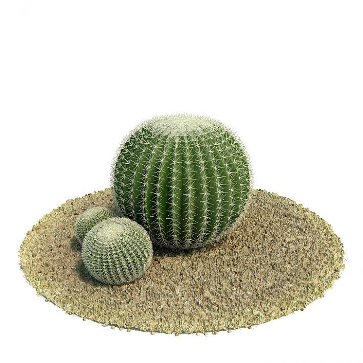 Echinocactus grusonii Plant 56 AM61 Archmodels