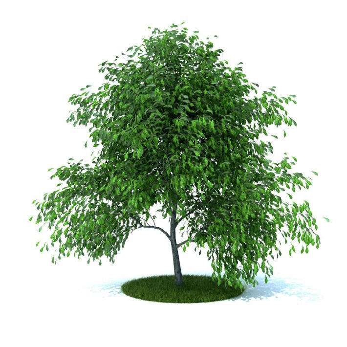 plant 15 am105