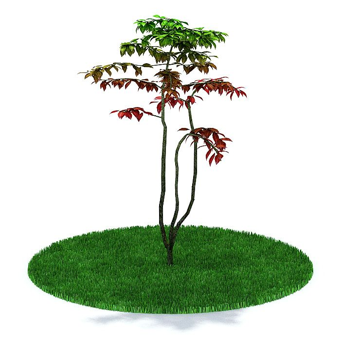 Plant 25 AM31 Archmodels