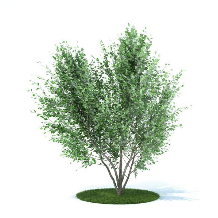 plant 17 AM105 Archmodels