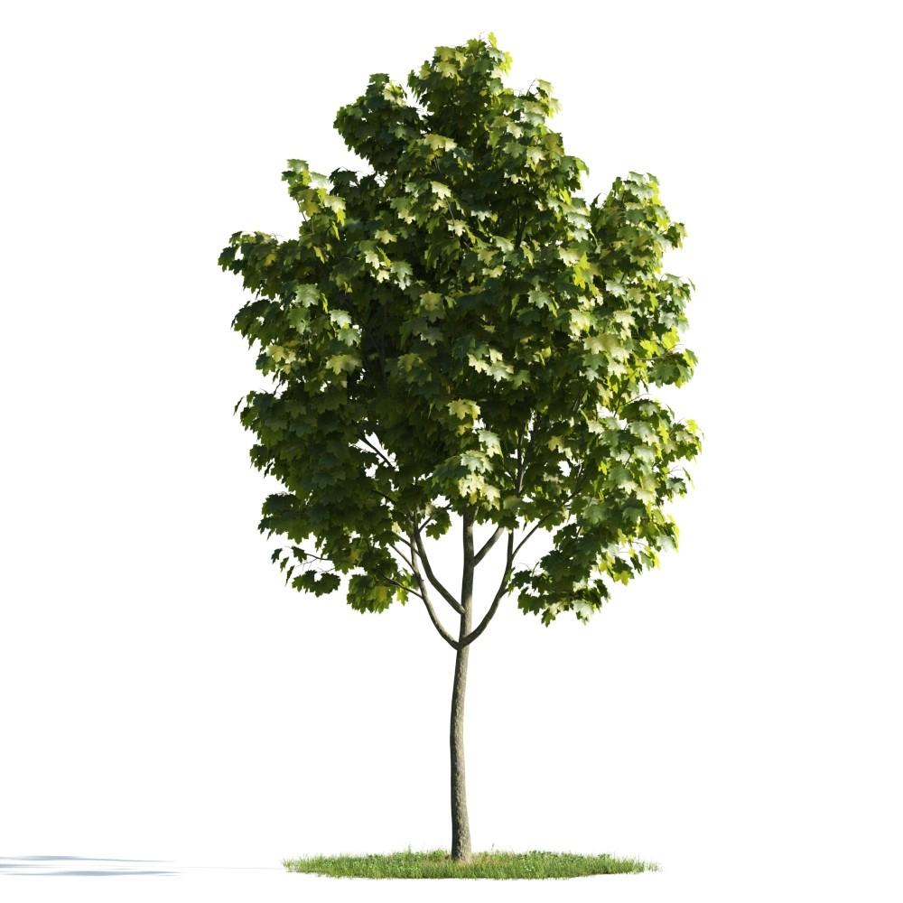 Tree 13 AM176 Archmodels