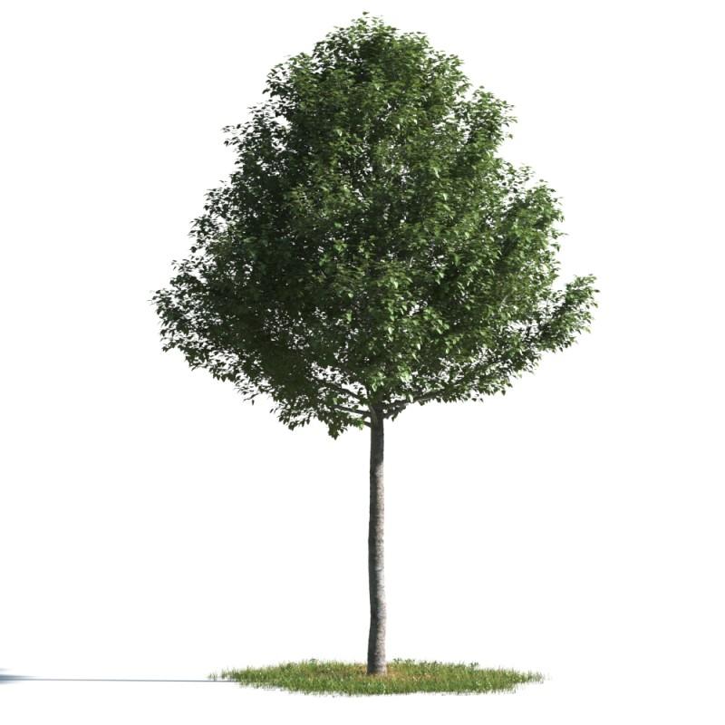 tree 23 AMC01