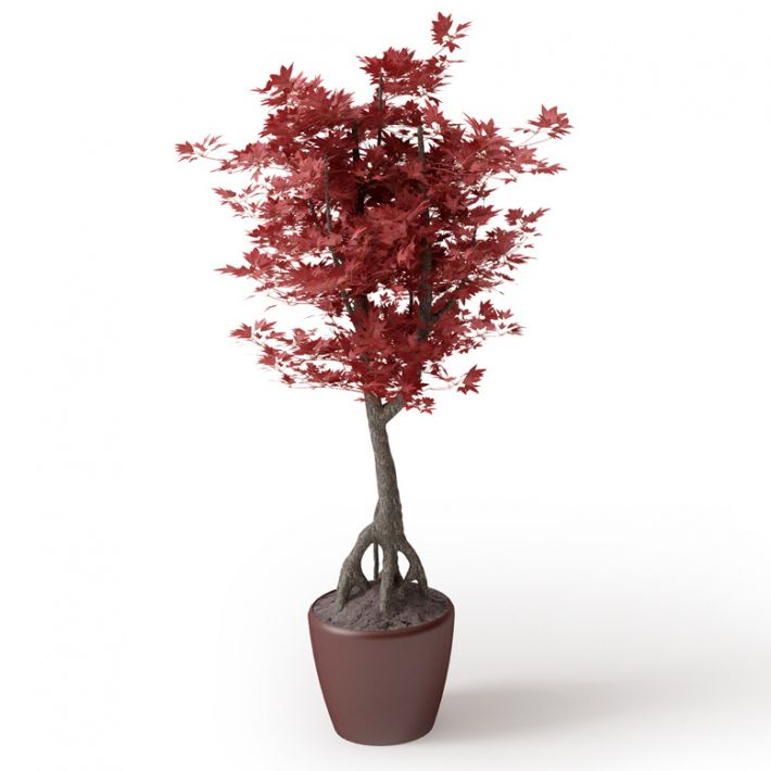 Plant 26 Archmodels vol. 66