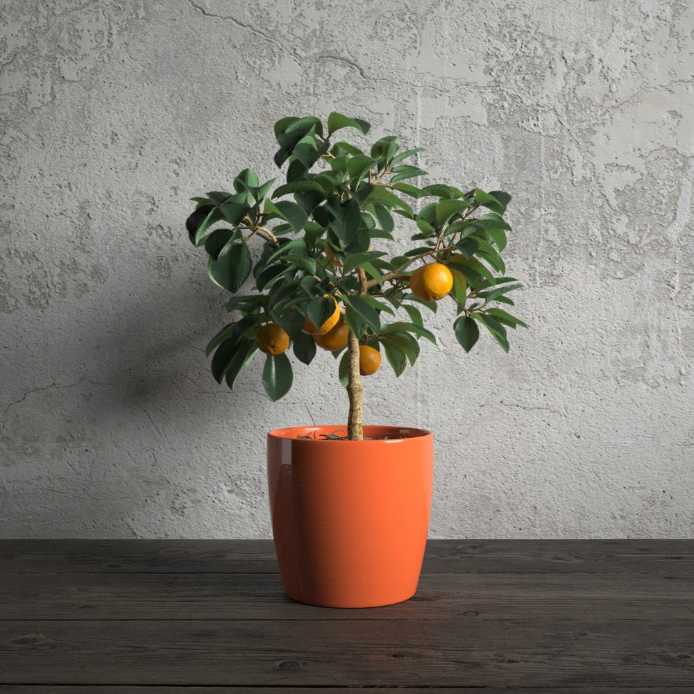 plant 47 am173