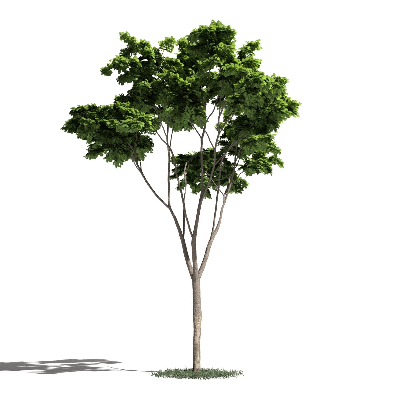 Tree 19 AM1 for Blender Archmodels