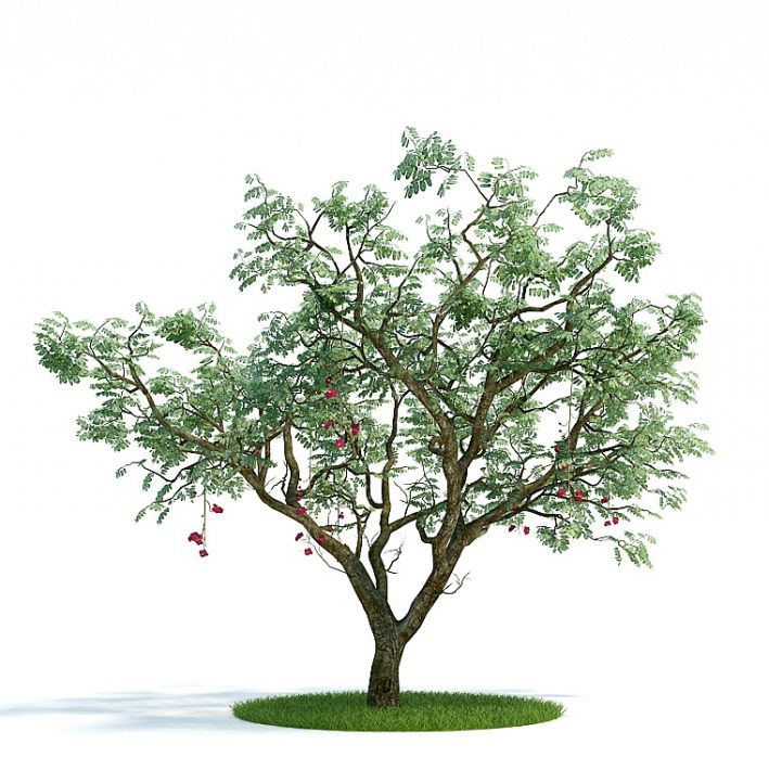 Ucla Plant 29 AM61 Archmodels