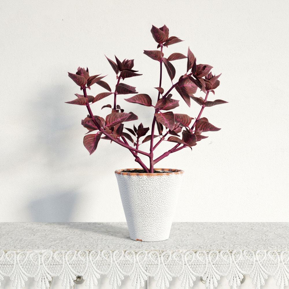 plant 34 AM141 Archmodels
