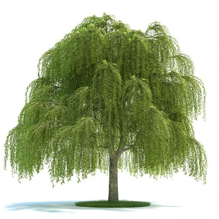 Salix Plant 13 AM58 Archmodels