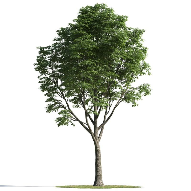 tree 03 AMC01