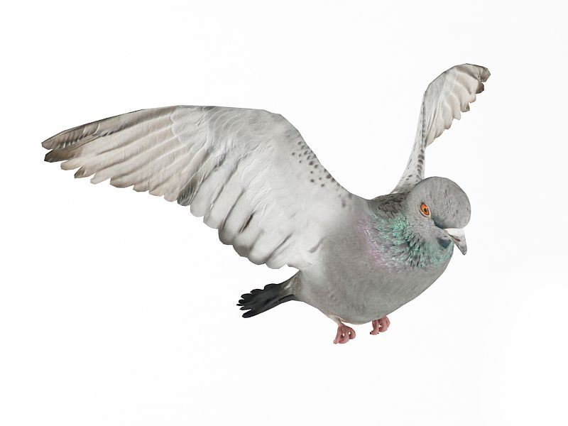 pigeon 10 AM83 Archmodels