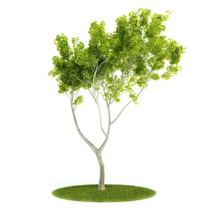 Plant 56 AM52 Archmodels