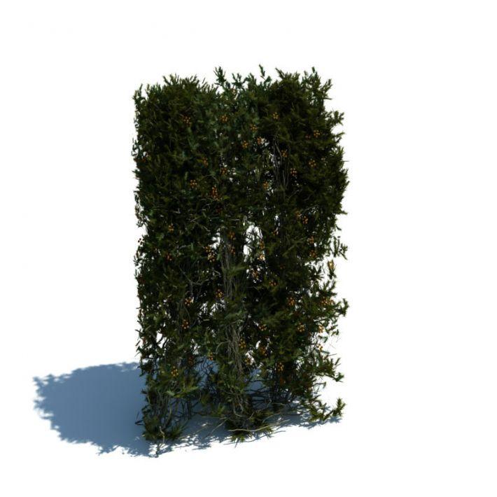 hedge 156 AM126 Archmodels