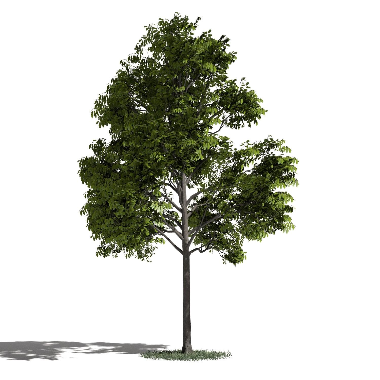 Tree 31 amb1