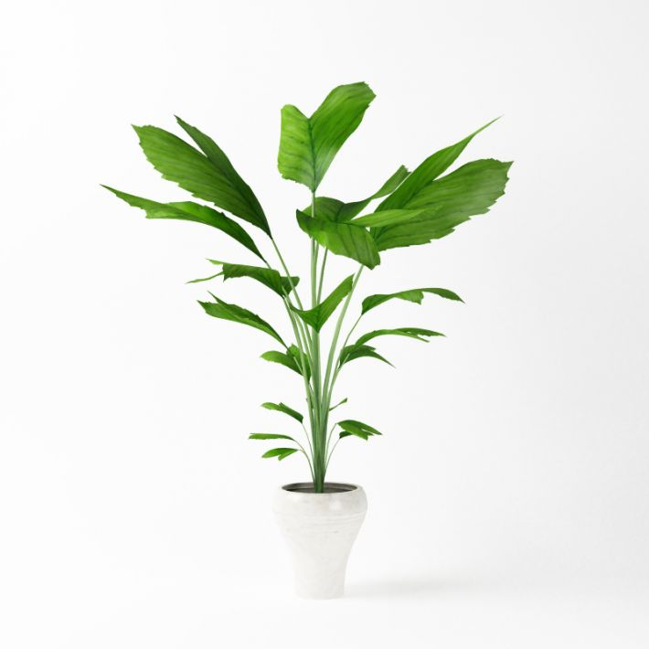 Plant 38 AM75 Archmodels
