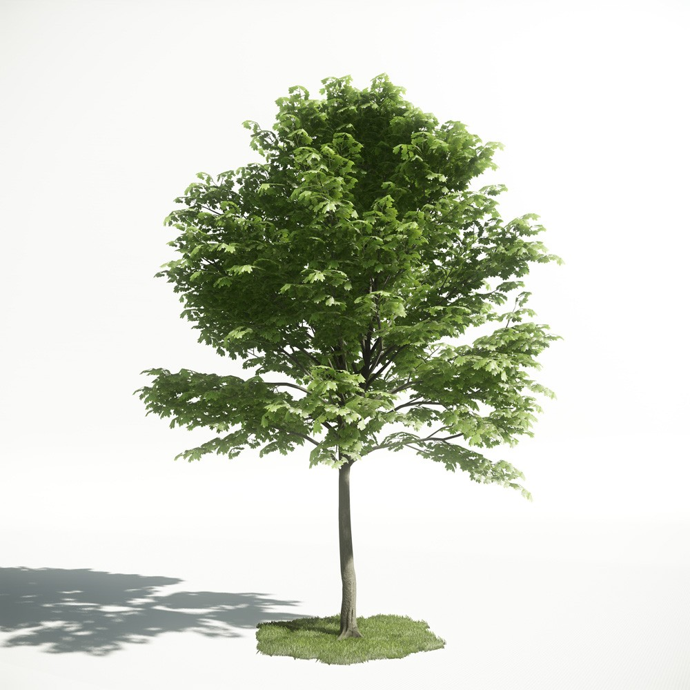 Tree 22 AM1 for CryEngine Archmodels