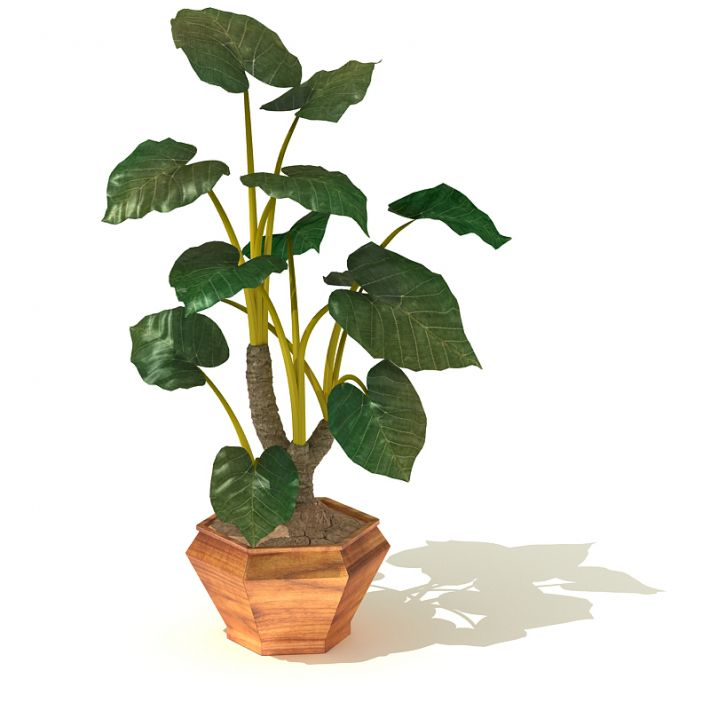 plant 22 AM41