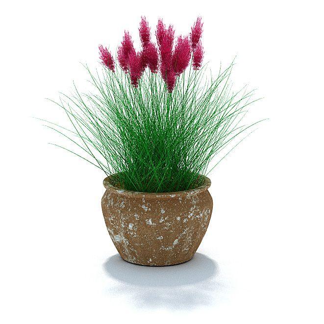 Plant 63 AM31